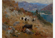 Herd in the mountains