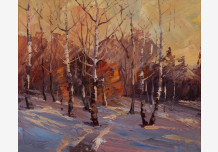 Sunset in the birch forest