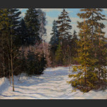 Spruce forest in late winter