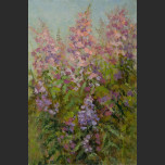 Flowering willow-herb