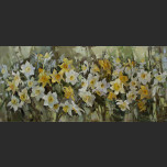 Sea of flowers. Narcissuses